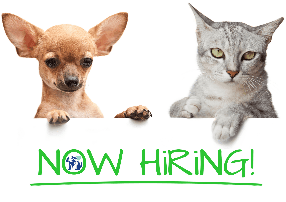 dog and cat holding Now Hiring sign